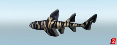 Акула бычья зебровидная