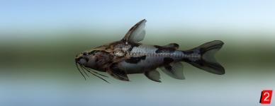 Анадорас темный пятнистый