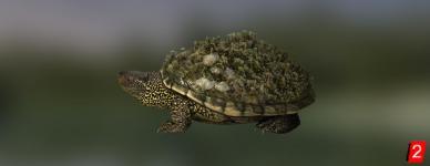 Черепаха чернобыльская