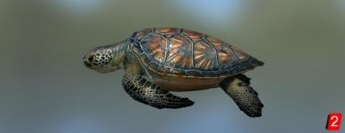 Черепаха морская зеленая