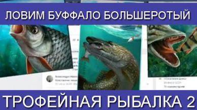 Embedded thumbnail for Ловим Буффало большеротый